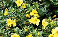Resultado de imagem para flores para jardim que florescem o ano todo