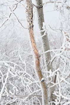 Photographing a winter wonderland - Image by Carla Dyck