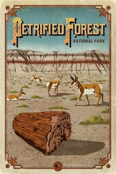 Travel Destinations Usa Tips Product National Park Posters, National Parks Usa, Parc National, Voyage Usa, Petrified Forest National Park, Nostalgia, Park Art, Vintage Travel Posters, Maps Posters