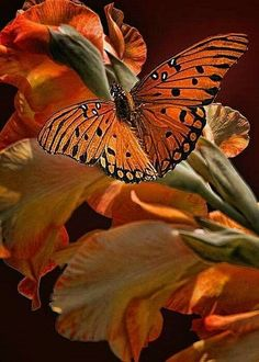 Orange butterfly perched on orange flowers. Papillon Butterfly, Butterfly Kisses, Butterfly Flowers, Beautiful Butterflies, Beautiful Birds, Animals Beautiful, Orange Butterfly, Flying Flowers, Butterfly Pictures