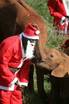 "Baby elephant at Christmas, The David Sheldrick Wildlife Trust...""Where's my fire truck?"""