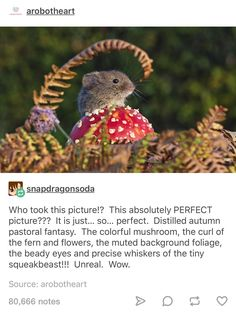 Mouse on a mushroom Distilled autumn pastoral fantasy. Cute Funny Animals, Funny Cute, Animals And Pets, Baby Animals, Kitten Baby, Beady Eye, Lol, In Vino Veritas, Animal Memes