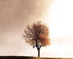 nature photography autumn leaves fall tree