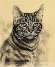 cat portrait conte pastel