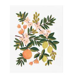 Citrus Floral Illustrated Art Print