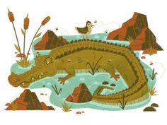 Let sleeping crocodiles lie by MUTI