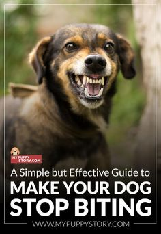 A Simple but Effective Guide to Make Your Dog Stop Biting - My Puppy Story @KaufmannsPuppy