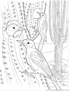 Cactus And Birds Coloring Page