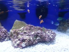 Fish tank sizes, Public service and Fish tanks on Pinterest