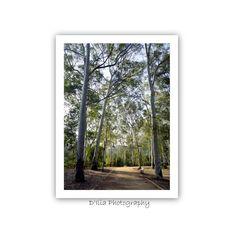 Eucalyptus Path Print 11.8x15.7 inch by diliabydiam on Etsy