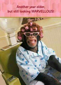Happy Birthday Silly :) - Happy Birthday Funny - Funny Birthday meme - - Happy Birthday Silly The post Happy Birthday Silly :) appeared first on Gag Dad. Happy Birthday Sister Funny, Birthday Wishes Funny, Happy Birthday Pictures, Happy Birthday Messages, Happy Birthday Quotes, Happy Birthday Greetings, Birthday Memes, Happy Birthday Dear Friend, Happy Birthday Funny Humorous