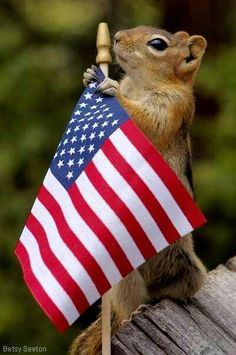Ever seen squirrels holding a flag, squirrels singing, dancing squirrel, with funny hair? If not lets show you some beautiful squirrel photos to amaze you. I Love America, God Bless America, America America, Captain America, Cute Squirrel, Squirrels, Squirrel Humor, Squirrel Girl, Raccoons