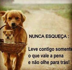 <3 <3 <3 #petmeupet #pug #filhode4patas #maedepet #maedecachorro #maedegato #paidegato #paidecachorro #gato #cachorro
