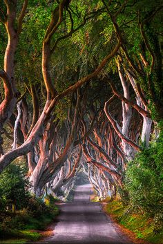 The Dark Green Hedges, Ballymoney, County Antrim, Northern Ireland | por www.joedanielprice.com