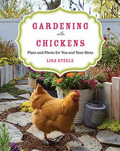 Booktopia has Gardening with Chickens, Plans and Plants for You and Your Hens by Lisa Steele. Buy a discounted Paperback of Gardening with Chickens online from Australia's leading online bookstore. Free Chickens, Raising Chickens, Chickens Backyard, Backyard Ducks, Keeping Chickens, Backyard Farmer, Backyard Poultry, Portable Chicken Coop, Diy Chicken Coop
