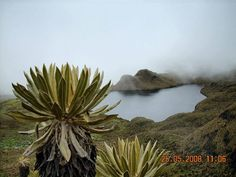 Laguna del otún (risaralda)