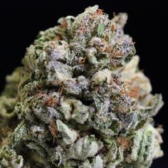 Blue Dragon Marijuana Strain Review And Pictures