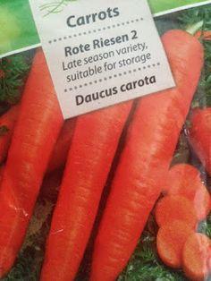 VIDA FELIZ: na Horta: Como Semear, Plantar e Colher CENOURAS