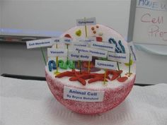 ANIMAL CELL MODEL IDEAS –Science class is always lots of fun! Learning science can be done in fun ways, especially when you learn the animal cell anatomy. One fun way to learn it is by knowing animal cell model ideas. 3d Animal Cell Project, Plant Cell Project, Cell Model Project, 6th Grade Science Projects, Biology Projects, School Projects, 3d Animal Cell Model, 3d Cell Model, Science Cells
