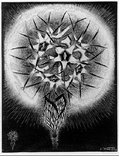 "M. C. Escher- ""Prickly Flower""- February 1936, Wood engraving, third state***"
