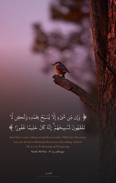 Noor Al-Quran Academy Quran Quotes Inspirational, Quran Quotes Love, Beautiful Islamic Quotes, Allah Quotes, Muslim Quotes, Arabic Quotes, Qoutes, Motivational, Hadith Quotes