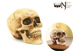 A real #bonehead will give you #house a daring #decoration delight! #skull #decor #reallook #creative #crafted