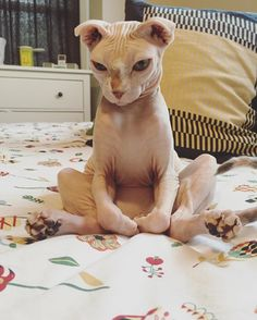 After a breakup with her boyfriend, Rylee Rae knew something was missing in her heart, and only one thing could fill it. She went online and found the purrfect match.Meet Delores the cat. Courtesy: Rylee Rae @ryleeraeRae is a cat person and has always loved hairless cats as far back as she could rem...