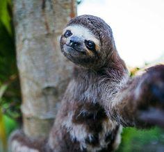 Sloth selfie.