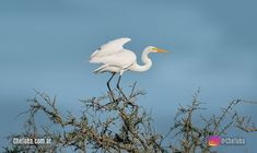 Dónde podés ver 60 especies de aves en 180 minutos?