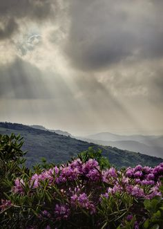 ✯ Sunbeams and Rhododendron