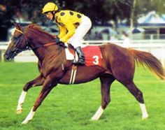 Daggers Drawn(1995)(Colt) Diesis- Sun And Shade By Ajdal. 4x4 To Crepello, 4(C)x5(F)x5(F) To Native Dancer, 5x5 To No Angel. 6 Starts 3 Wins. Won Richmond S(Eng-2), Champagne S(Eng-2).