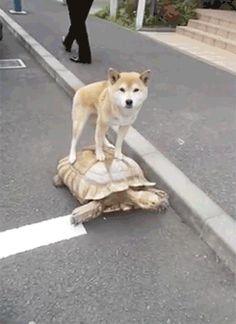 Moyen de transport écologique. Essayer la tortue !