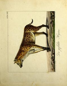 atlas - Abbildungen und Beschreibungen merkwürdiger naturgeschichtlicher Gegenstände / - Biodiversity Heritage Library