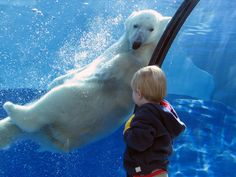 Polar Bear Swimming with Child find out more about our polar bear mission at www.polarbearpictures.org