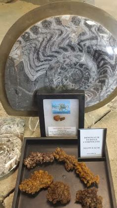 350 Mill Yr Old Ammonite Fossil plaque from Morocco and yes, Dino do-do too is available at The Sand & Stone Gallery in Holland, MI.