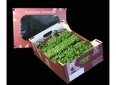 how to growing microgreens for sale - Google Search