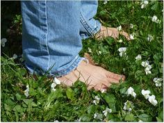 """""""Freedom Lawn"""". Imagining a no-mow yard: 7 lawn alternatives in pictures — Timber Press Talks"""