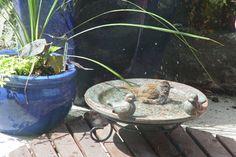 cómo hacer un baño de aves climatizada