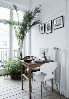 Køkken med grønne planter