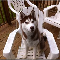 Haha my pup prefers to sit in chairs :-P