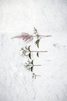 marmer - planten - bloemen - stilleven - rikstadhouders