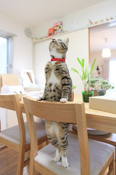 Cute baby cat. I couldn't have plants on the table because my kitty children would eat them!