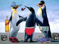 Luis Felipe 2ºB - Penguins Ostentação