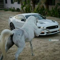 Ford Mustang Shelby likes · talking about this. The best of Ford Mustang ! It's not just a car – it's a passion. Mustang Cobra, Ford Mustang Shelby, Chevrolet Trucks, Ford Trucks, 1957 Chevrolet, 4x4 Trucks, Diesel Trucks, Chevrolet Impala, Lifted Trucks