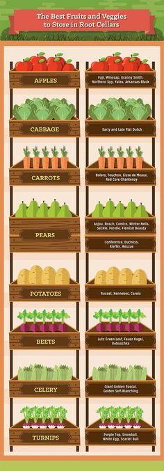 Root Cellars: Cold Room Plans and Temperature : Crops for root cellar storage Root Cellar Plans, Potager Bio, Cellar Design, Best Fruits, Preserving Food, Food Storage, Storage Ideas, Kitchen Storage, Storage Room