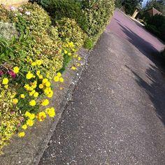 VISIT: www.darrenfower.uk  #Peterborough #LiberalDemocrats #LibDems #Cambridgeshire #Politics #DarrenFower #PeterboroughCityCouncil #CllrFower #Community #PeterboroughCC #OutAndAbout #Activism #CityCouncil #LocalAuthority #Government #Werrington #Gunthorpe #UK