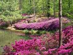 Calloway Gardens, GA-- a perfect place for a day-trip or even a little get-away like we have for Easter.