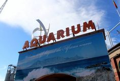 Blog – Two Oceans Aquarium Cape Town, South Africa | Exhibits | Conservation | Education | Events | Diving