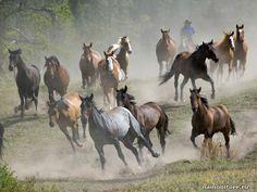 Фотография Табун диких лошадей, животные, лошади, табун - Дикие - Обои для рабочего стола. Wallpapers