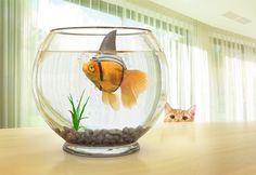 "Consulta este proyecto @Behance: ""Fish Bowl"" https://www.behance.net/gallery/45920199/Fish-Bowl"